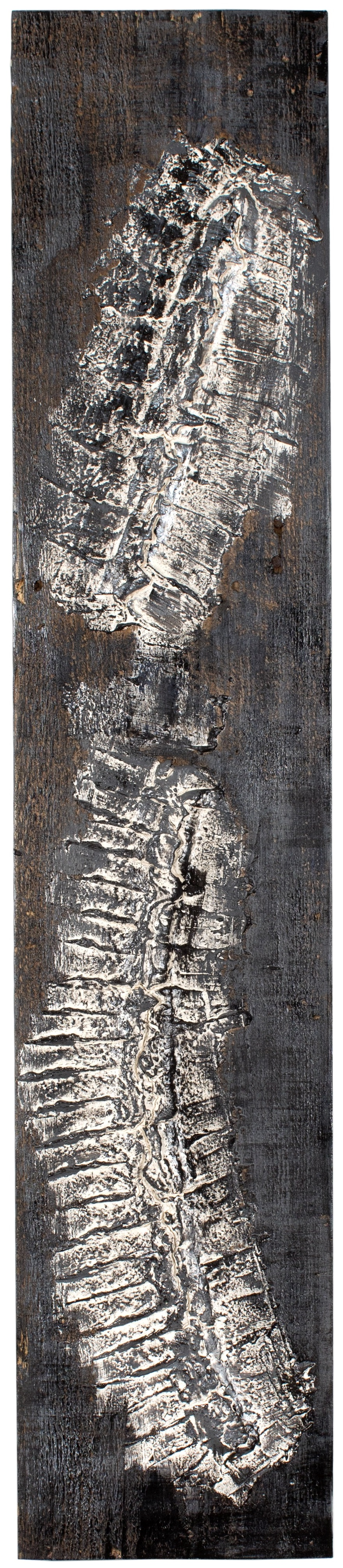 VERTEBRAE#4 - Plaster and acrylic on rough spruce board, 20x100cm - AVAILABLE