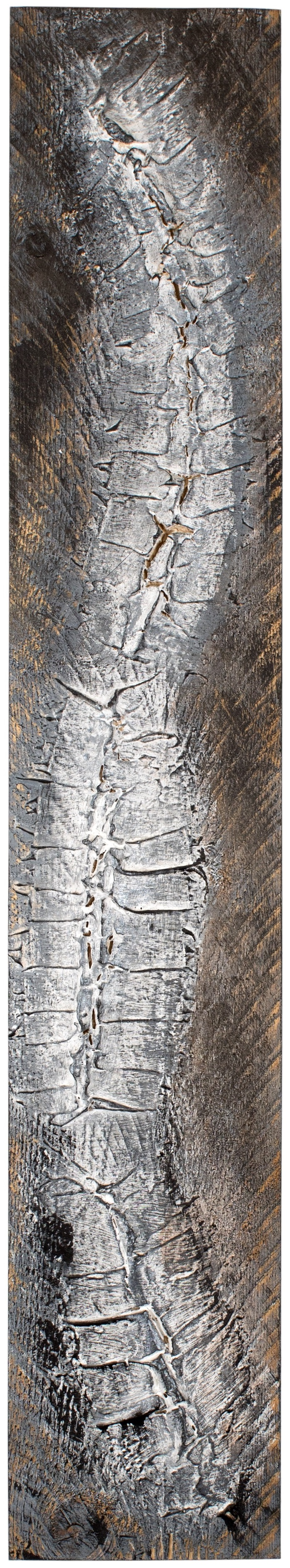 VERTEBRAE#5 - Plaster and acrylic on rough spruce board, 20x93cm - AVAILABLE