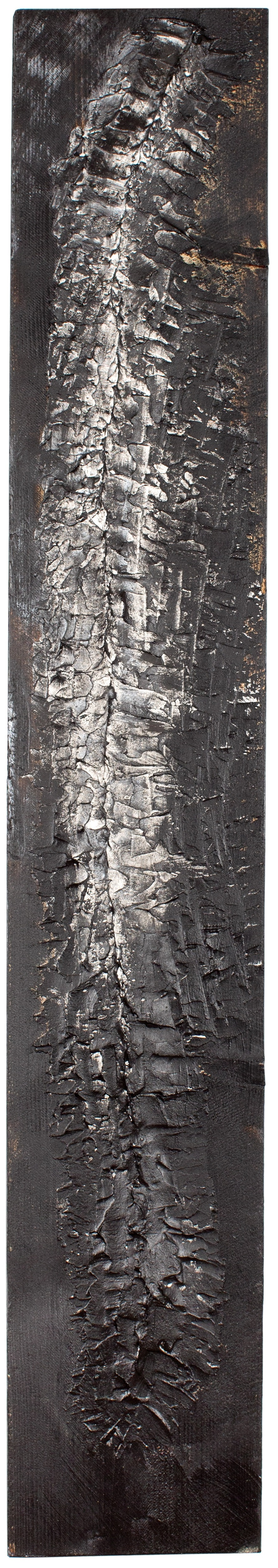 VERTEBRAE#8 -Plaster and acrylic on rough spruce board, 20x124cm - UNAVAILABLE